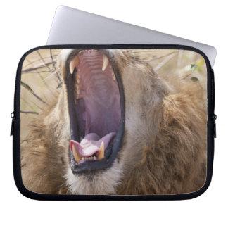 Male Lion (Panthera leo) yawning, Masai Mara Computer Sleeve