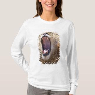 Male Lion (Panthera leo) yawning, Masai Mara T-Shirt