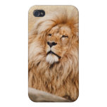 Male Lion Photo Cases For iPhone 4