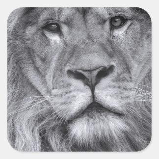 Male lion portrait square sticker