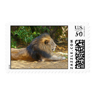Male Lion Postage