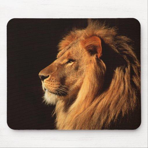 - male_lion_profile_wildlife_images_by_steven_holt_mousepad-rd977f790b98a45739a86d48ce59435e6_x74vi_8byvr_512