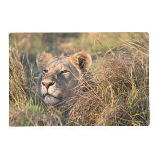 Male lion stalking in grass, head peeking out placemat