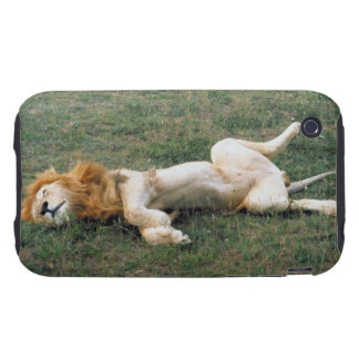 Male Lion Stretching Tough iPhone 3 Case
