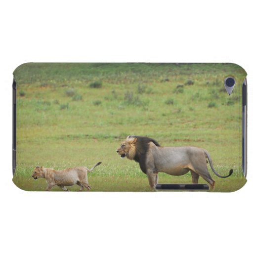 male lion with cub, Panthera leo, Kgalagadi iPod Touch Cases