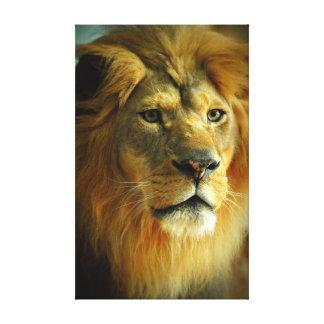 Male Lion Wrapped Canvas