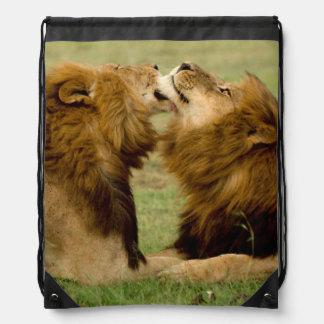 Male Lions (Panthera Leo) Grooming, Maasai Mara Drawstring Backpack