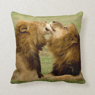 Male Lions (Panthera Leo) Grooming, Maasai Mara Pillow