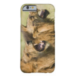 Male lions roaring, Greater Kruger National iPhone 6 Case