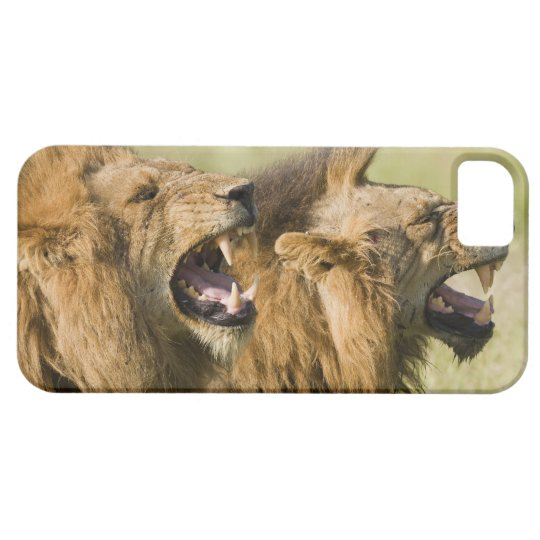 Male lions roaring, Greater Kruger National iPhone SE/5/5s Case