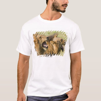Male lions roaring, Greater Kruger National T-Shirt