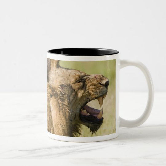 Male lions roaring, Greater Kruger National Two-Tone Coffee Mug