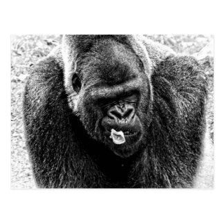 Male Lowland Silverback Gorilla, Black and White Postcard