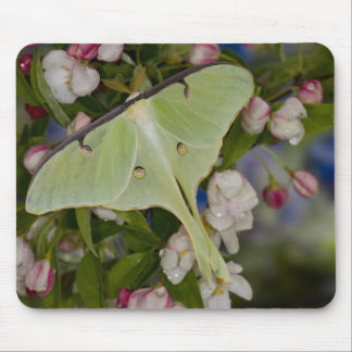 Male Luna Silk Moth of North American 2 Mouse Pad