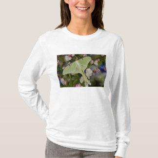 Male Luna Silk Moth of North American 2 T-Shirt