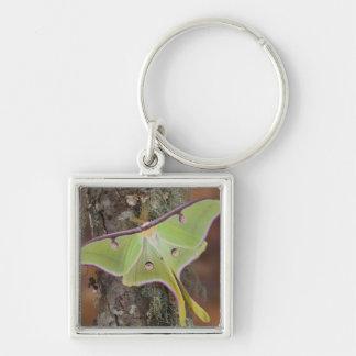 Male Luna Silk Moth of North American Silver-Colored Square Keychain
