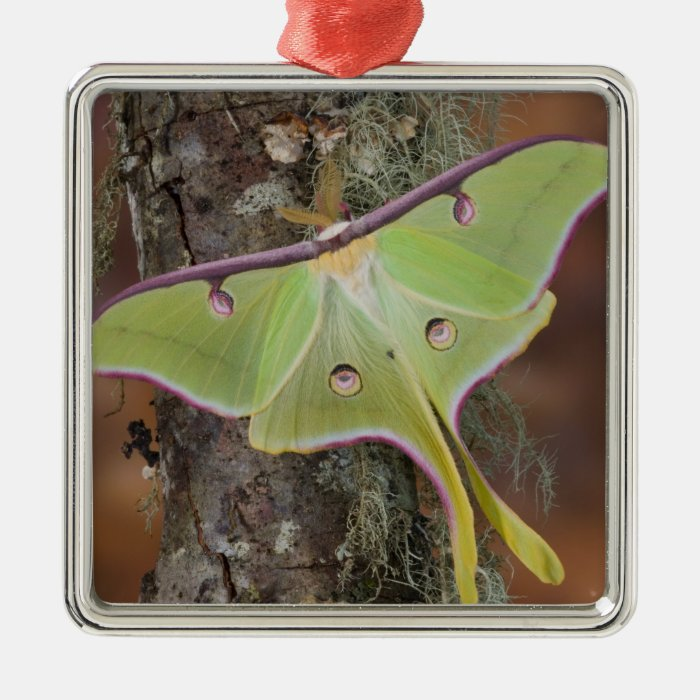 Male Luna Silk Moth of North American Metal Ornament