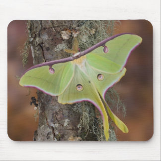 Male Luna Silk Moth of North American Mouse Pad