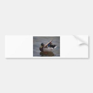 Male Mallard Duck Bumper Sticker