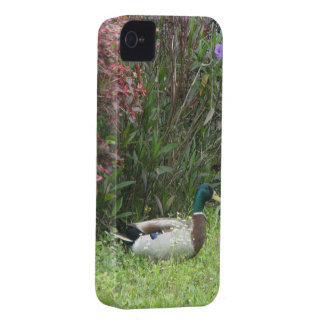 Male Mallard Duck Case-Mate Case Blackberry Case
