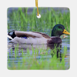 Male mallard duck floating on the water ceramic ornament
