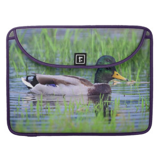 Male mallard duck floating on the water sleeve for MacBooks
