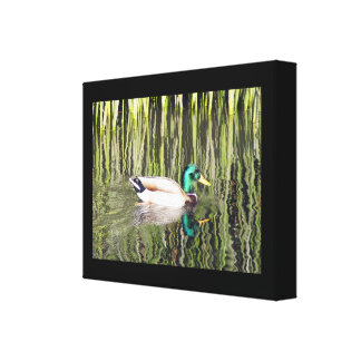 Male Mallard Duck Gallery Wrapped Canvas Print