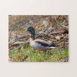 Male Mallard Duck Jigsaw Puzzle