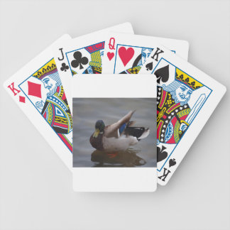 Male Mallard Duck Card Deck