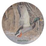 Male Mallard Duck Taking Off Wildlife Bird Plate