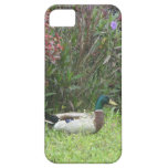Male Mallard Ducks Case iPhone 5 Cover