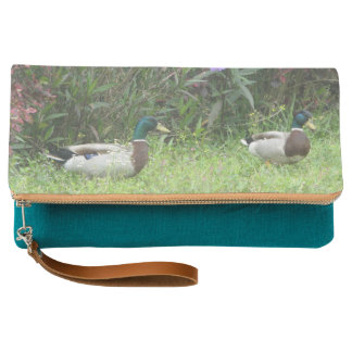 Male Mallard Ducks Clutch