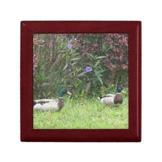 Male Mallard Ducks giftbox Gift Boxes