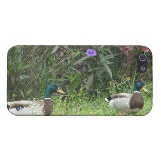 Male Mallard Ducks iPhone 5 Cases