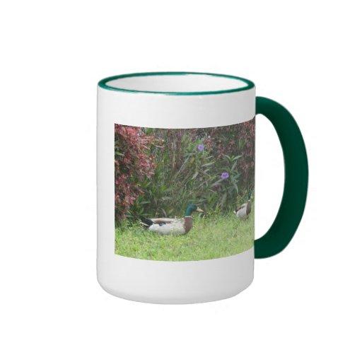 Male Mallard Ducks Mug