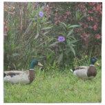 Male Mallard Ducks Napkins