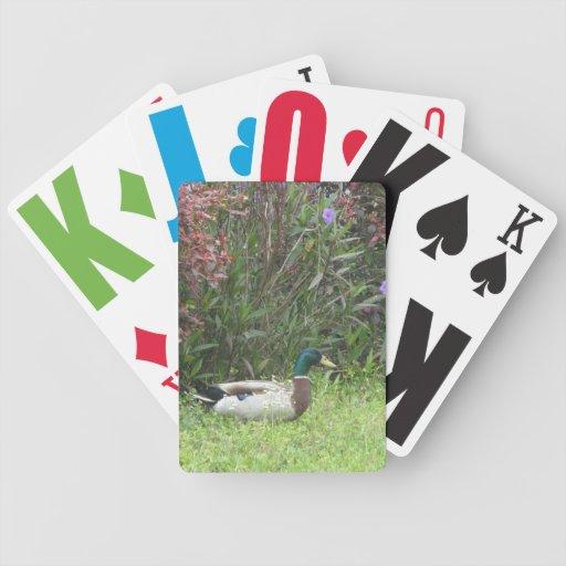Male Mallard Ducks Playing Cards