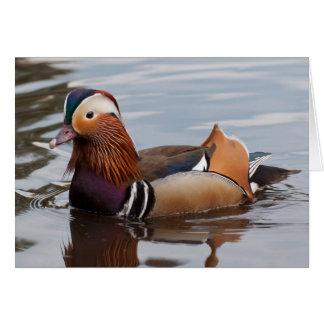 Male Mandarin Duck Notecard Greeting Cards