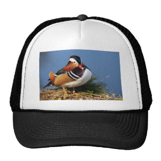 Male mandarin duck on the bank of pond trucker hat