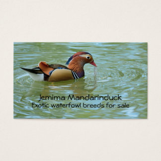 Male mandarin duck photo business card