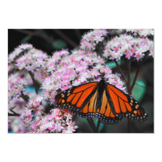 Male Monarch Butterfly Danaus Plexippus Card