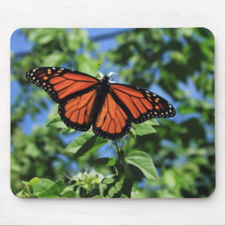 Male Monarch Butterfly Mouse Pad