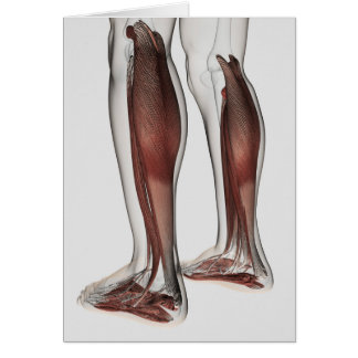 Male Muscle Anatomy Of The Human Legs, Anterior 5 Greeting Cards
