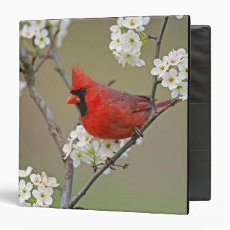 Male Northern Cardinal among pear tree 3 Ring Binder