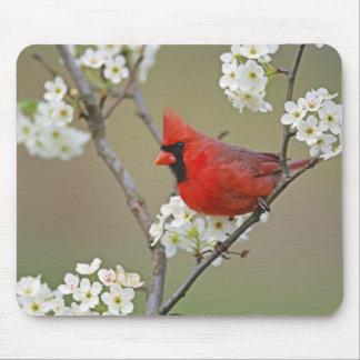 Male Northern Cardinal among pear tree Mouse Pad