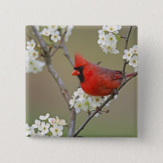 Male Northern Cardinal among pear tree Pinback Button