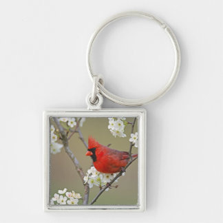 Male Northern Cardinal among pear tree Silver-Colored Square Keychain