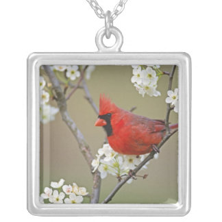 Male Northern Cardinal among pear tree Silver Plated Necklace
