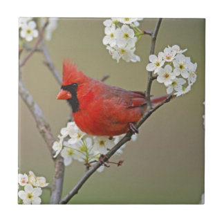 Male Northern Cardinal among pear tree Small Square Tile