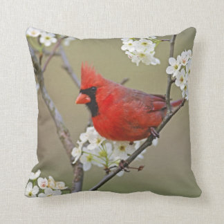 Male Northern Cardinal among pear tree Throw Pillow